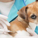 Villasor, mercoledì 20 marzo l'anagrafe dei cani