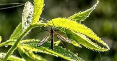 Area metropolitana, iniziata la campagna per la lotta alle zanzare