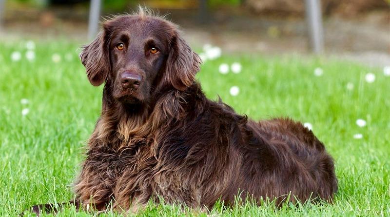 Decimomannu, l'11 giugno la microchippatura gratuita dei cani