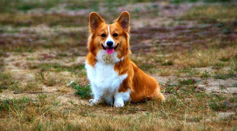 Immagine generica cane