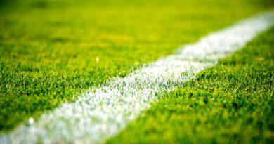 Erba campo calcio