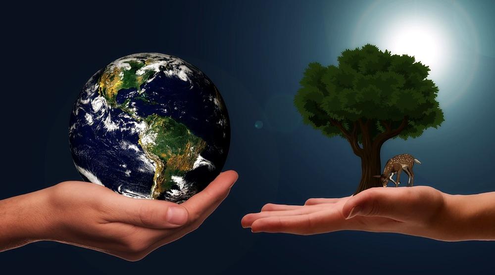 Mondo albero